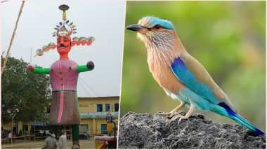 Dussehra 2018: Importance of 'Neelkanth'; Know the Significance Behind Seeing the Indian Roller Bird on This Day