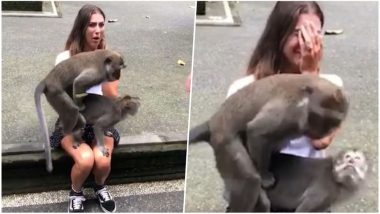 Horny Monkeys Have Sex On A Female Tourist's Knees In A Forest In Bali -Watch The Hilarious Video