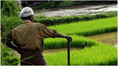 Maharashtra Govt's Farm Loan Waiver Benefits State Cooperative Banks, Nationalised Banks Struggle to Address Issues