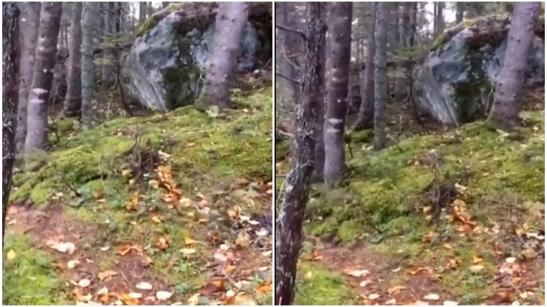 Is The Forest Breathing? Know the Reality of This Viral Video From Quebec