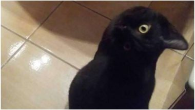 Cat or Crow? Yet Another Photo Illusion Goes Viral on The Internet