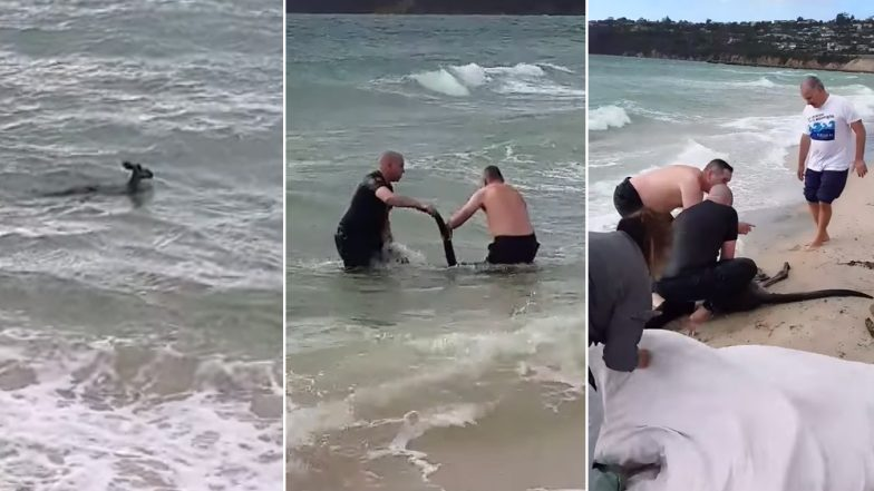 Australian Cops Rescue Kangaroo Drowning in Seawater, Video Goes Viral