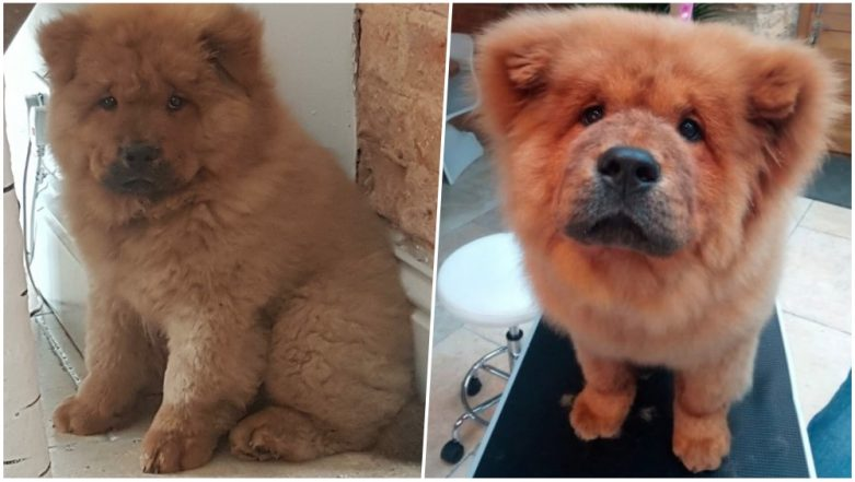Pup Bungle Held in UK's Police Custody for Biting Cops Freed After Huge Social Media Outcry