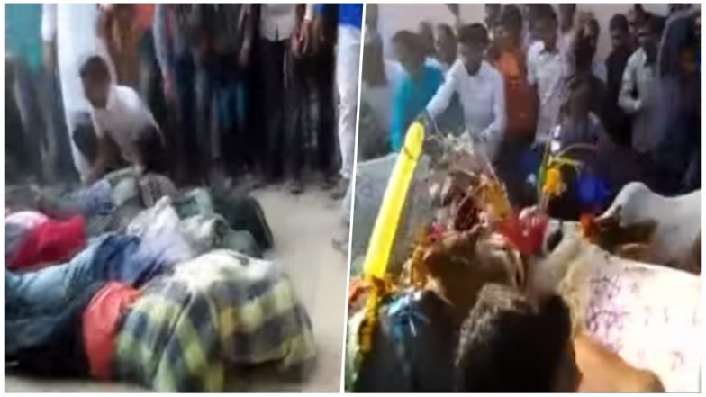 Govardhan Puja 2018 Celebrations: Villagers in Ujjain Crushed Under Cattle's Feet in Weird Ritual for Goodluck and Prosperity, Watch Shocking Video!