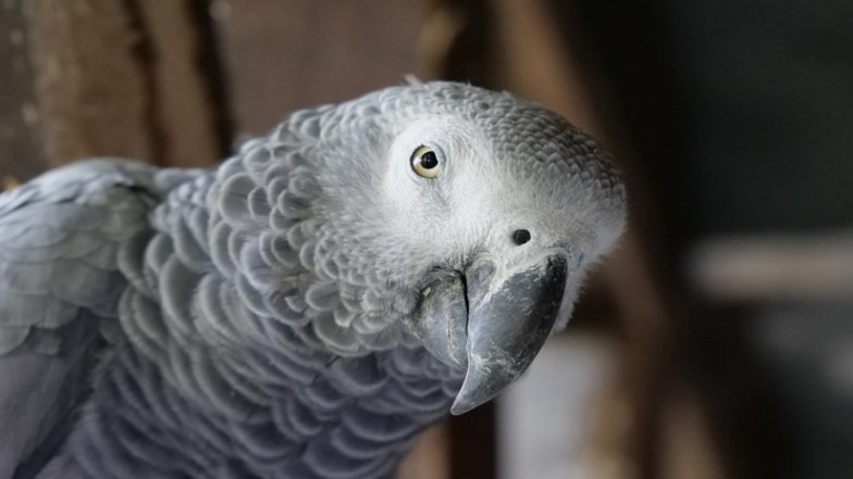 Parrot Imitates Smoke Alarm Sound Perfectly! Firefighters Reach For Rescue in Northamptonshire