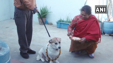 Diwali 2018: Nepal Honours Dogs By Celebrating Kukur Tihar on Deepawali; Here's Why