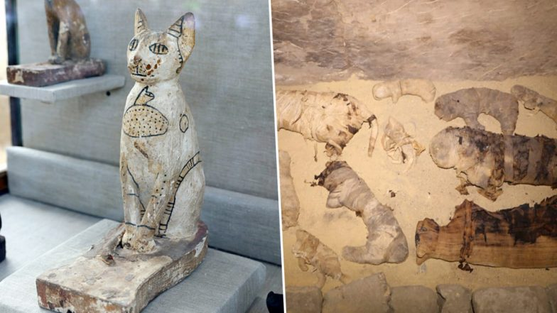 5000-Year-Old Mummified Cats Uncovered From Egyptian Excavation Site in Cairo, View Pics