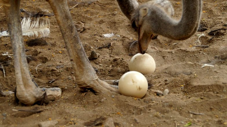 Bladder Stone As Big As an Ostrich Egg Was Removed From a Chinese Man's Stomach