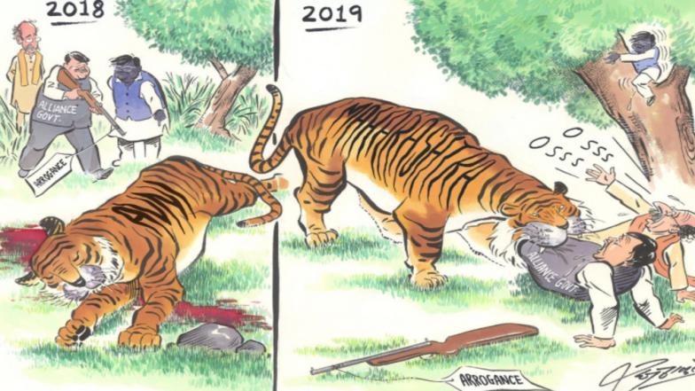 Avni Tigress Killing Case: MNS Chief Raj Thackeray Takes a Dig At BJP- Shiv Sena Government