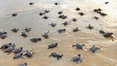 UP Shocker: 654 Turtles Including 482 Dead Recovered from Pond in Etawah