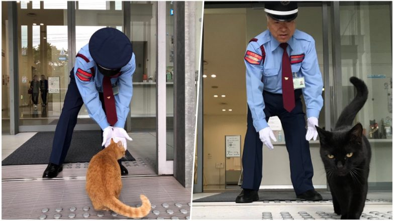 Two Stubborn Cats Ken-Chan & Goasaku Continue Their Attempt to Get Inside Japan's Art Museum After Repeated Denial Since Two Years, View Pics