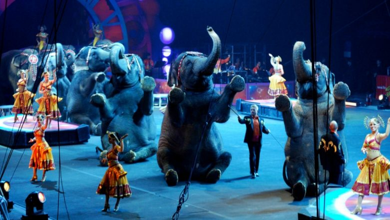 Circus Shows: Centre Proposes Ban on Use of All Animals