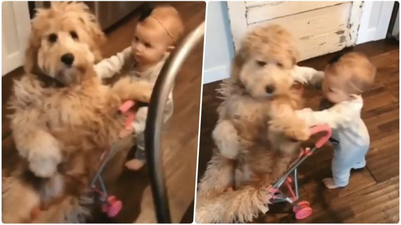 Naughty Kid Pushes Dog From Her Ride Is the Cutest Video on the Internet