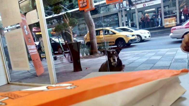 Pizza-Loving Dog in Mexico Pretends to Be Stray to Get Free Slices While Wearing a Tag, 'Don't Give Me Pizza' (View Pics)
