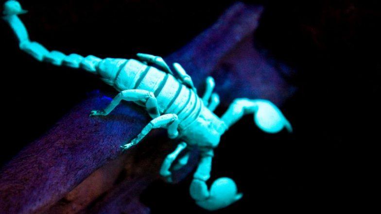 e8a5871084c1 Youtuber s Video of Glowing Scorpion Fascinates Twitteratti