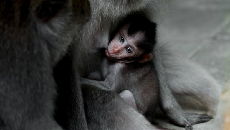 Moscow Zoo Welcomes a Rare Western Lowland Gorilla & It's a Girl!