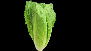 Romaine Lettuce in US Contaminated By E Coli Bacteria; CDC Warns People After 32 People Taken Ill