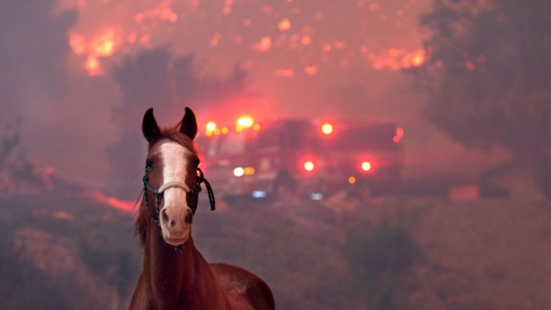 California Wildfire Takes Heavy Toll on Animals Despite Massive Rescue Operations; Heart-Rending Pictures Go Viral