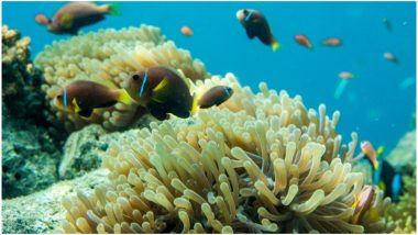 Palau To Ban Sunscreen To Save Coral Reefs: Here's How Sunscreen Affects Marine Life