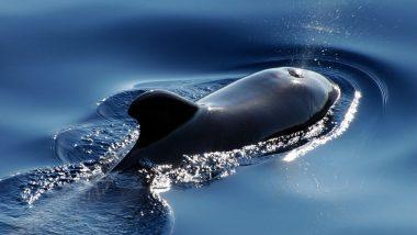 145 Pilot Whales Die in Stranding on Stewart Island in New Zealand