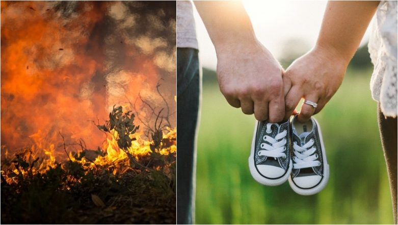 Baby Gender Reveal Party Caused Arizona Wildfire That Required 800 Firefighters to Douse (Watch Video)