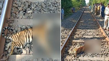 Maharashtra: 2 Tiger Cubs Crushed to Death by Train Near Lohara Forest Area, Chandrapur