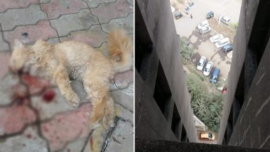 Thane Man Throws Neighbour's Pet Cat From 16th Floor; Netizens Furious