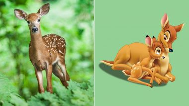 Deer Poacher From Missouri 'Sentenced' To Watch Disney's Bambi Movie Once a Month in Jail
