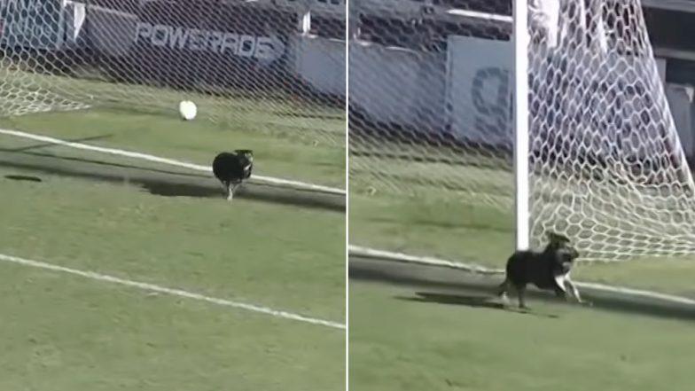 Viral Video: Dog Saves a Goal in a Football Match in Argentina, Gets Declared 'Best Goalkeeper' by Enthusiastic Netizens