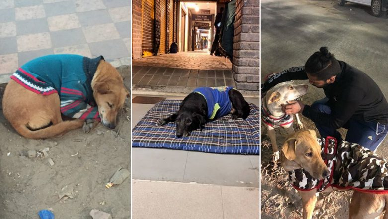 Delhi Winters: Stray Dogs in Capital City Get Sweaters Every Winter to Fight Cold, See Cute Pictures