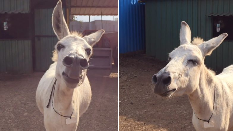Meet Emily, The Singing Donkey From Maharashtra Who Sings Whenever in Mood, Watch Video