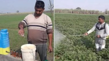 Alcohol Boosts Potato Production? Farmers in Uttar Pradesh Are Trying New Technique to Increase Produce, View Pics