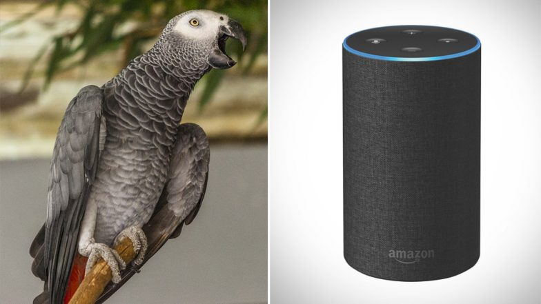 Parrot Befriends Amazon Alexa, Plays Songs and Shops Online While Owner is Away