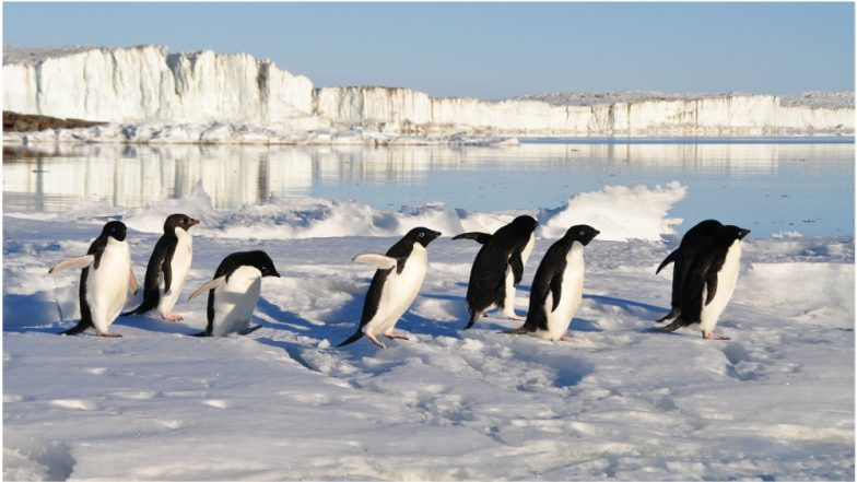 Penguin Poo Images Taken from Space Can Help Scientists Determine Antarctica's Health