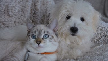 Pets Not For Sale in UK? Government Bans Shops Selling Puppies and Kittens