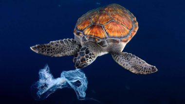 Turtles From All Seven Oceans in The World Have Microplastics in Their Body! New Study Reveals Shocking Extents of Plastic Pollution