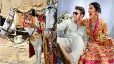 Priyanka Chopra, Nick Jonas Slams by PETA India for Using Animals at Their Wedding