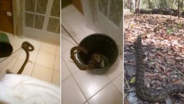 Australian Woman Finds 4-Metre-Long Python Next to Bed Apparently Wanting to Eat Her! Rescues Herself, Watch Shocking Video