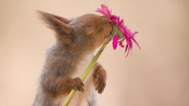 Photographer Captures Squirrels for 6 Years and Gets The Cutest Photos of These Little Chipmunks