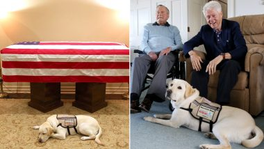 Photo of Late US President George Bush's Service Dog Sully Lying Next to His Casket Is Why We Say 'Dogs Are Man's Best Friend'