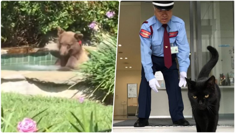 Viral Animals of 2018: From Margarita-Loving Bear to Stubborn Cats, These Funny Pics and Videos Will Make You Smile