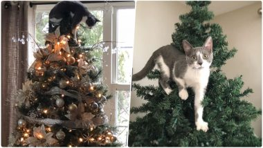 Christmas 2018: Cats Have Been Wrecking Xmas Trees, Giving Headaches to Pet Owners Everywhere