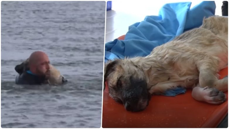 Puppy Rescued by Brave Police Diver From Frozen Lake in Turkey; Watch Video