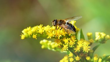 World's First Honey Bee Edible Vaccine Discovered by Finland Scientists to Protect the Queen Bees