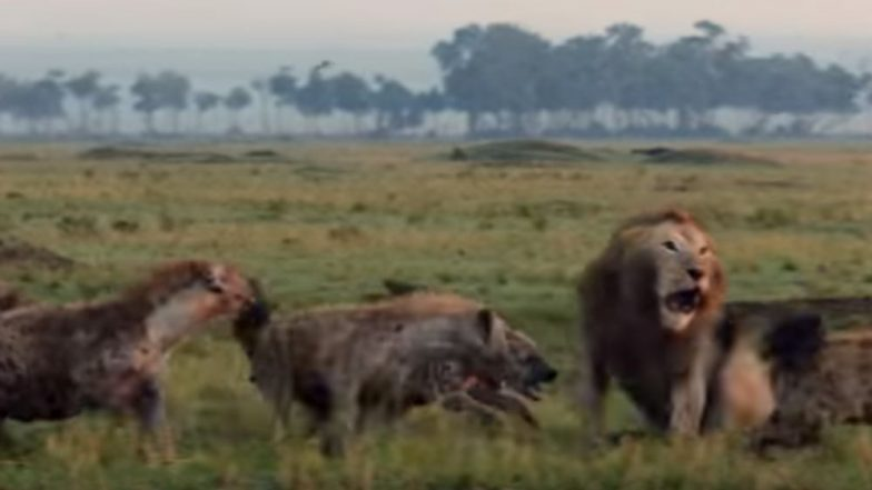20 Hyenas Attack A Lion! You Won't Believe What the King of the Jungle Does Next (Watch Video)