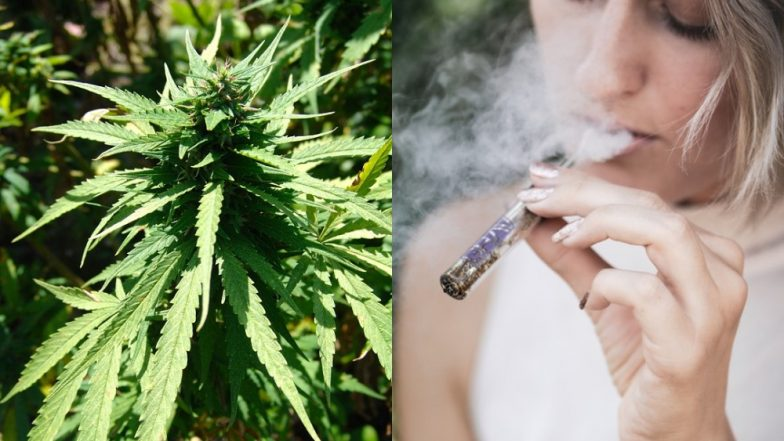 its a happy new year 2019 for thailand as government legalises marijuana for medical purpose