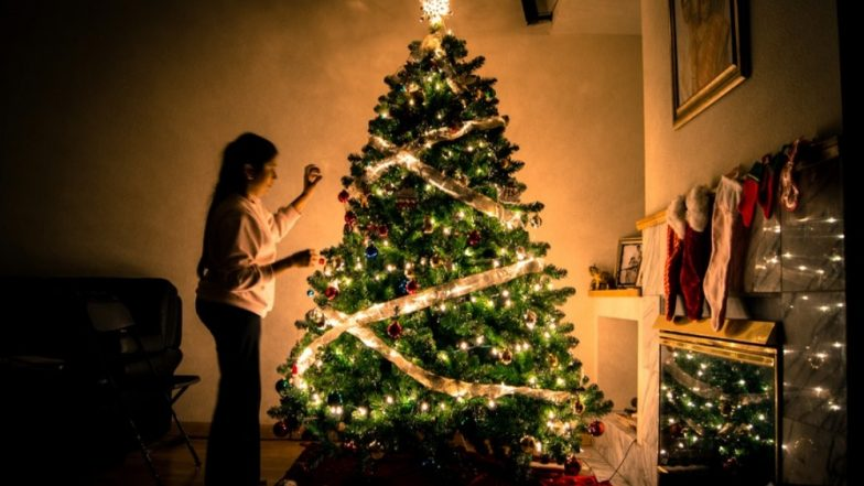 Reuse Your Christmas Trees! Know How Pine Needles Can Be Used for Household Necessities