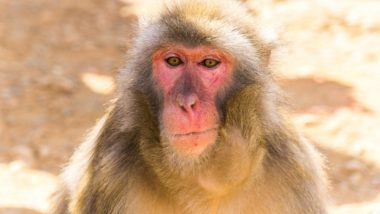 World's Oldest Monkeys to Help Us Fight HIV?