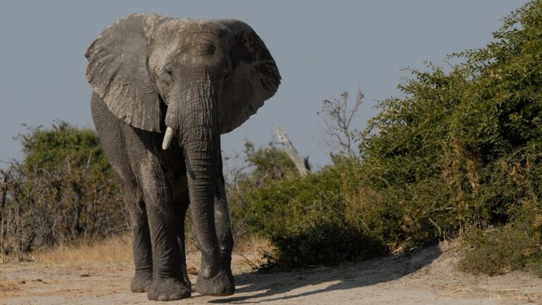 Kerala: Wild Elephant Tramples Sabarimala Pilgrim to Death in Forest Area