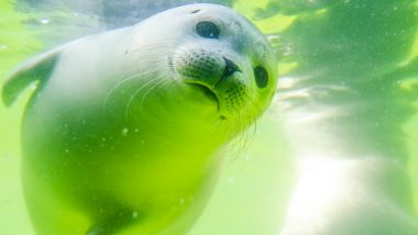 Seal Pup With Umbilical Cord Still Attached Rests on a Plastic Bottle in UK Beach; View Pic
